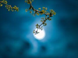 Nouvelle Lune 13 mars 2021